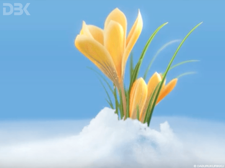 fiore crocus 3D per spot video Banca Ticino